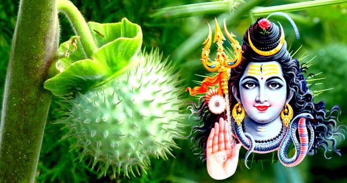 duthar-tree